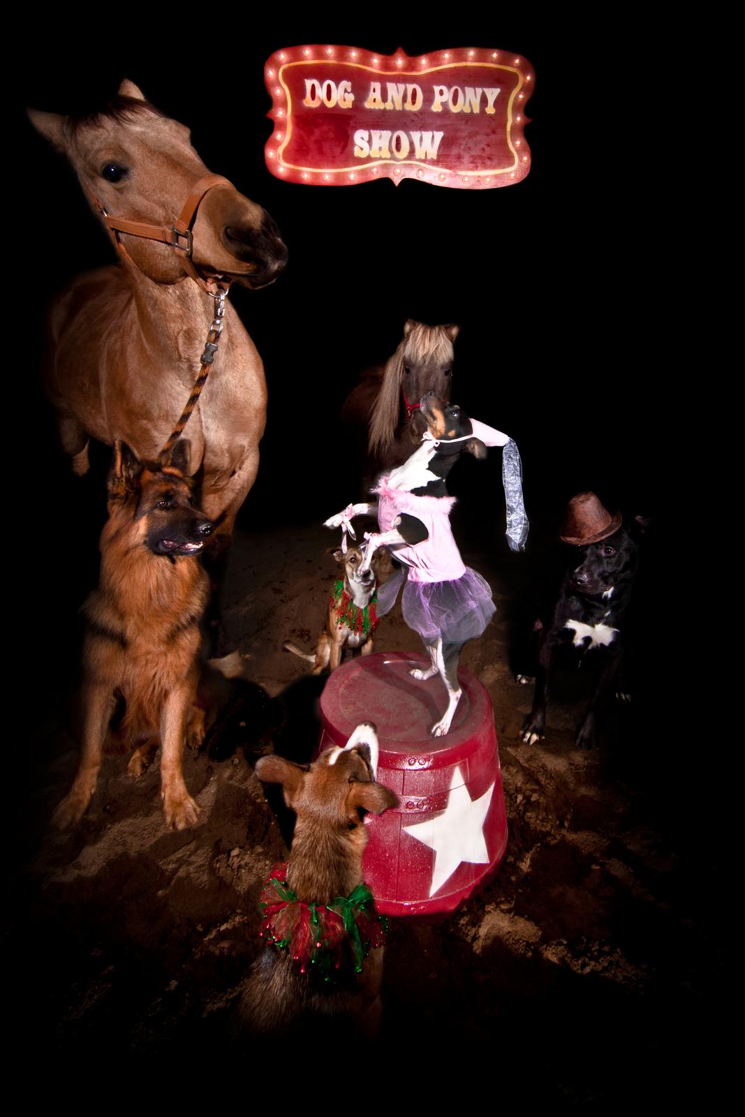 Dog and Pony Show Brandon Engel Color Print 24X36  300